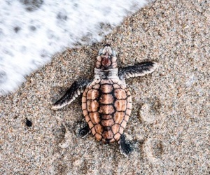 animal, sea, and sea turtle image