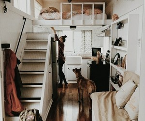 brown, decor, and dog image