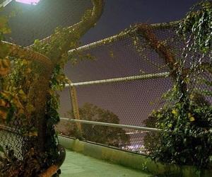 dark, grunge, and nature image