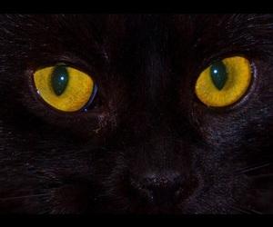 aesthetic, cat eyes, and grunge image