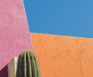beautiful, sky, and cactus image
