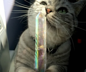 cat and crystal image