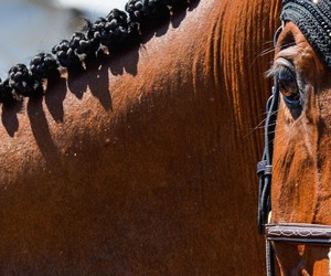 cheval, equestrian, and horse image