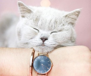 animal, cat, and watch image