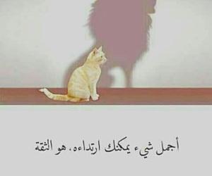 Image by 𓄂 ᖇᗩᑎᎥᗩ️ ⁶⁹𓆪🥀🇮🇶