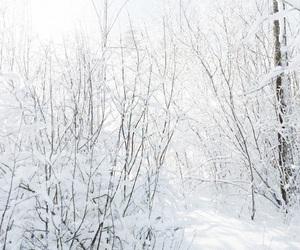 beautiful, finland, and nature image