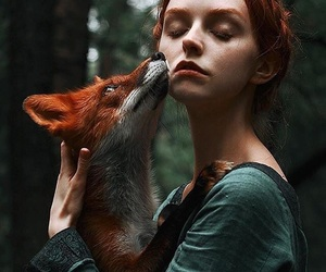fox, red, and nature image