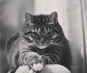 black&white and cat image