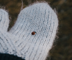 coccinelle, mittens, and winter image