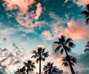 palm trees, travel, and wanderlust image