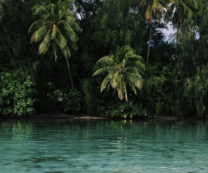 exotic, green, and nature image