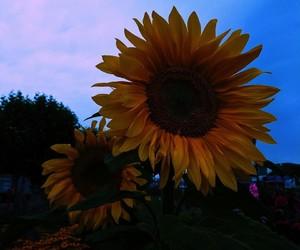 aesthetic, alternative, and sunflowers image