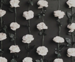 b&w, black, and roses image