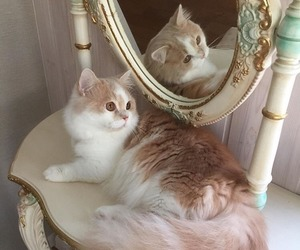 aesthetic, mirror, and pets image