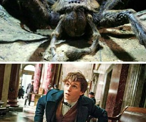 harry potter, spider, and potterhead image