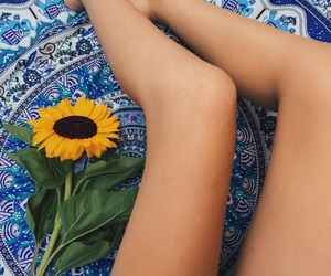 blue, flower, and sunflower image
