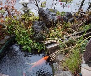 japan, like, and 庭園 image