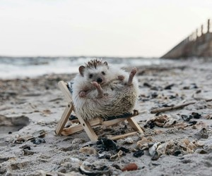 beach, hedgehog, and cute image