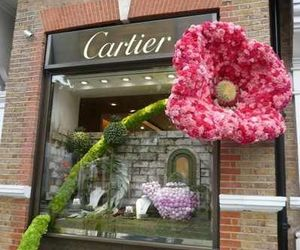 cartier, flower, and france image