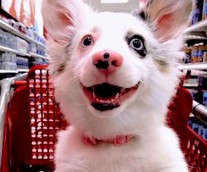 dog cute aesthetics red image