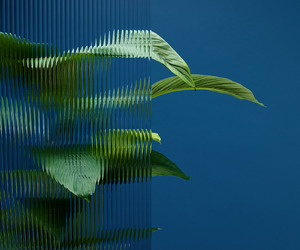 blue, plants, and green image