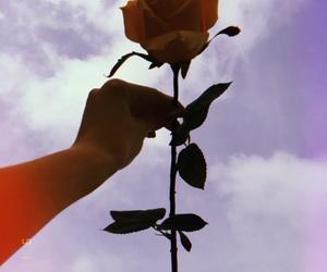 grunge, indie, and roses image