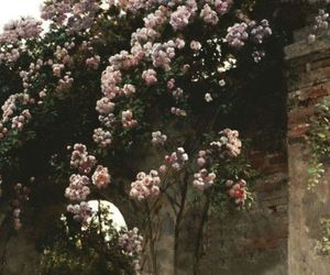 aesthetic, close-up, and garden image