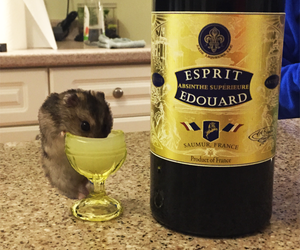 absinthe, hamster, and jade image