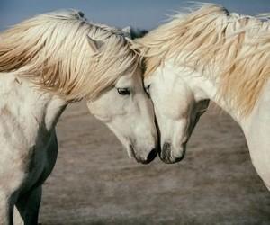 horses and white image
