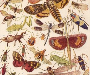 art, bee, and butterfly image