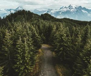 nature, forest, and aesthetic image