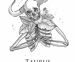 taurus and zodiac image