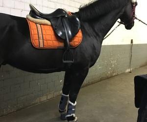 equestrian, horse, and orange image