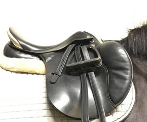 horse, oldenburger, and venezia image