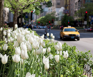 flowers, city, and new york image