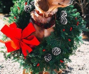 animals, christmas, and dog image