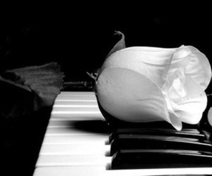 piano, black and white, and rose image