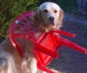 dog and reaction image