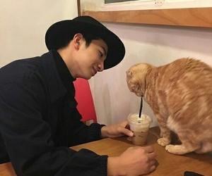 cat, korean, and ulzzang image