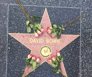 black and pink, bowie, and flower image