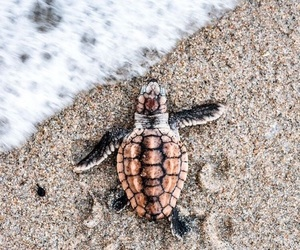 ocean, water, and seaturtle image