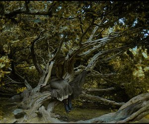 analog, tree, and vintage image