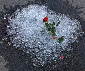 rose, ice, and aesthetic image