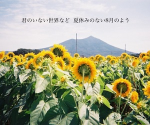 sunflower, japan, and summer image