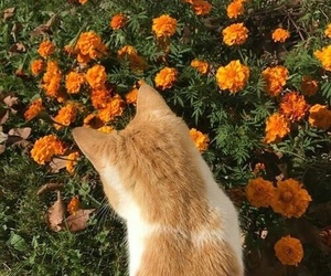 cat, flowers, and green image
