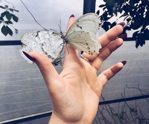 aesthetic, beautiful, and butterfly image