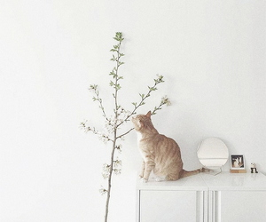 cat, white, and aesthetic image