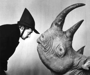 dali, animal, and rhino image