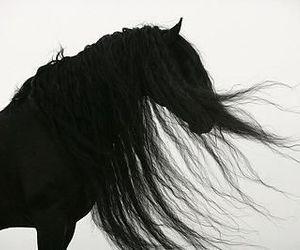 amazing, beautiful, and black image