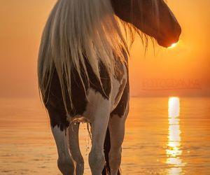horse, sunset, and animals image